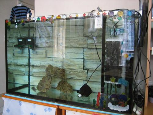 生态鱼缸布景效果图 生态鱼缸石头布景 生态鱼缸布景图片 高清图片